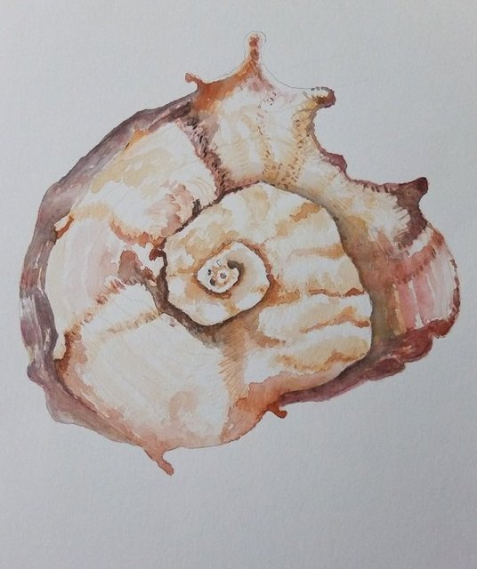 Ochre Shell by Alison Gracie