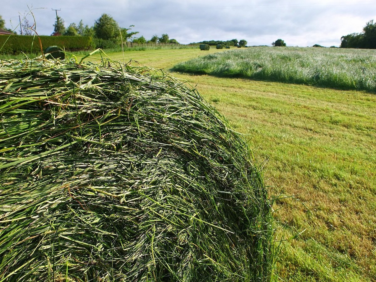 Green Hay Bales by Alison Gracie