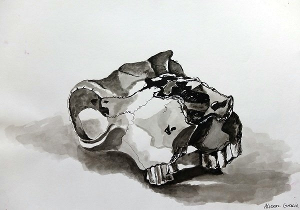 Skull drawing in ink by Alison Gracie