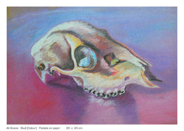 Skull in pastels by Alison Gracie