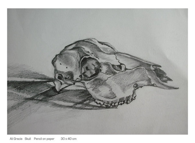 Skull pencil drawing by Alison Gracie