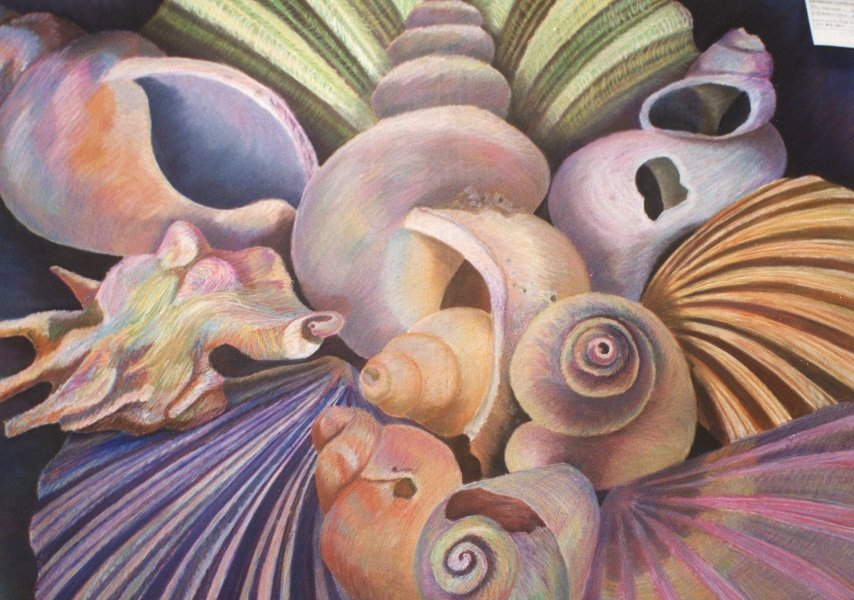 Shell Still Life by Alison Gracie