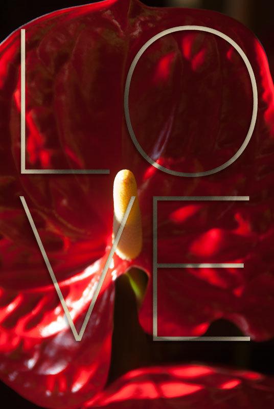 love=0z8.jpg