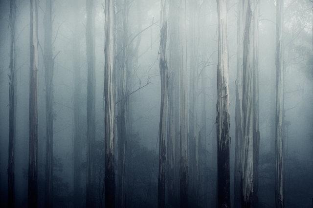 toolangi-forest-victoria-100.jpg