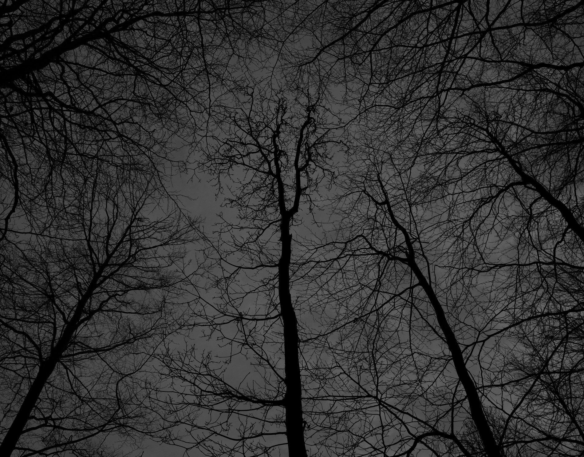 Dark black bare trees 02