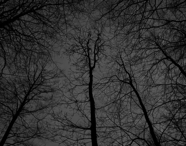 Dark black bare trees 02