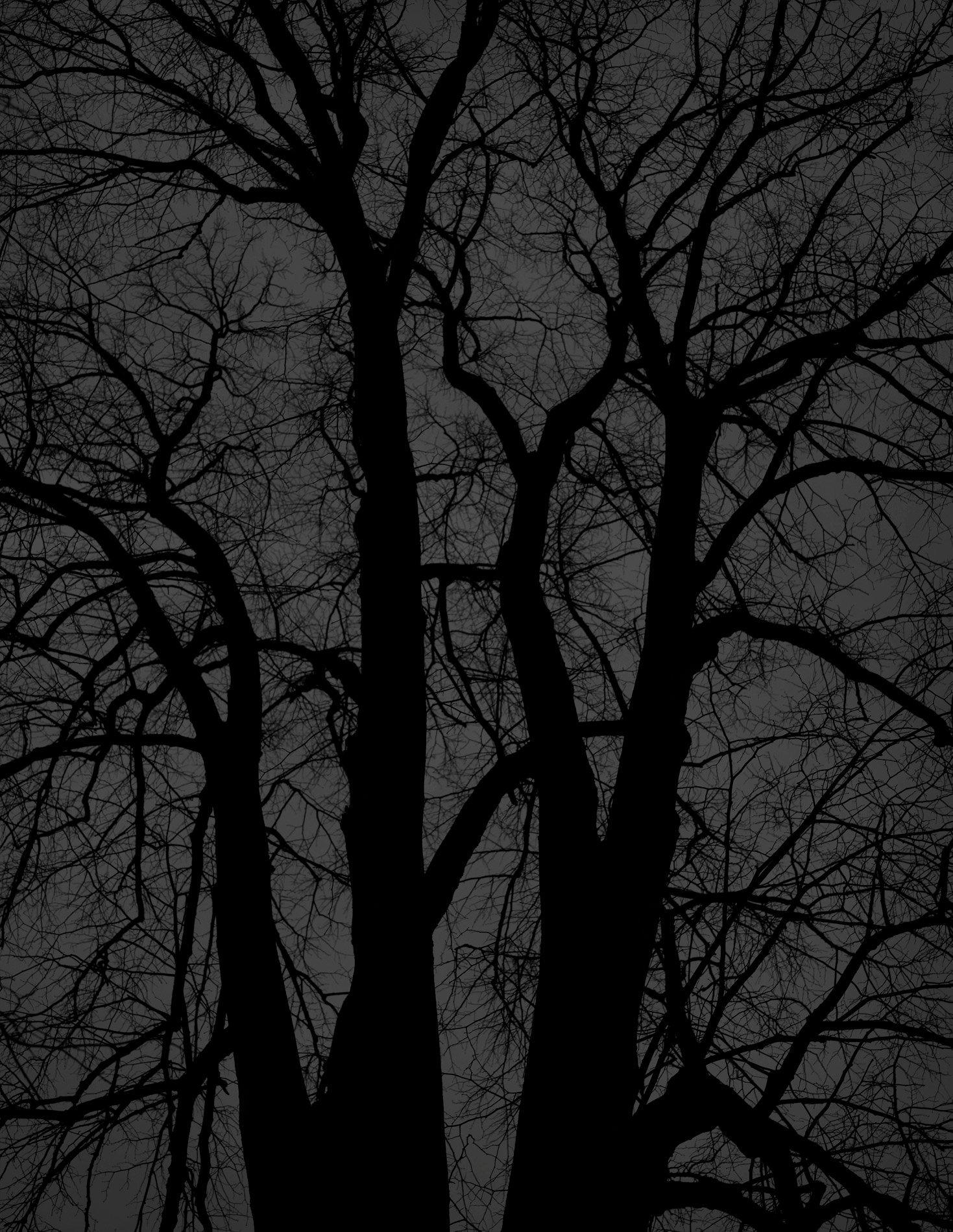 Dark black bare trees 08