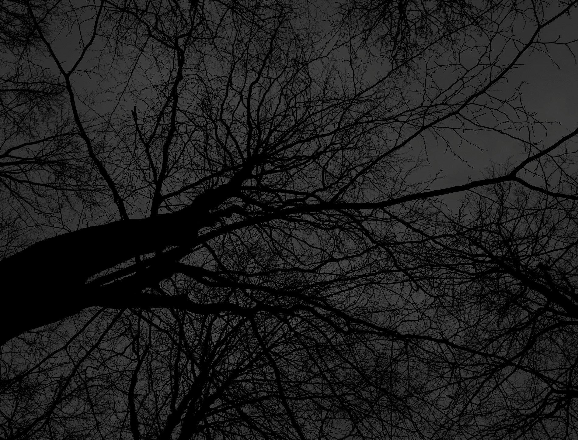 Dark black bare trees 05