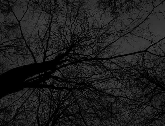 Dark black bare trees 05
