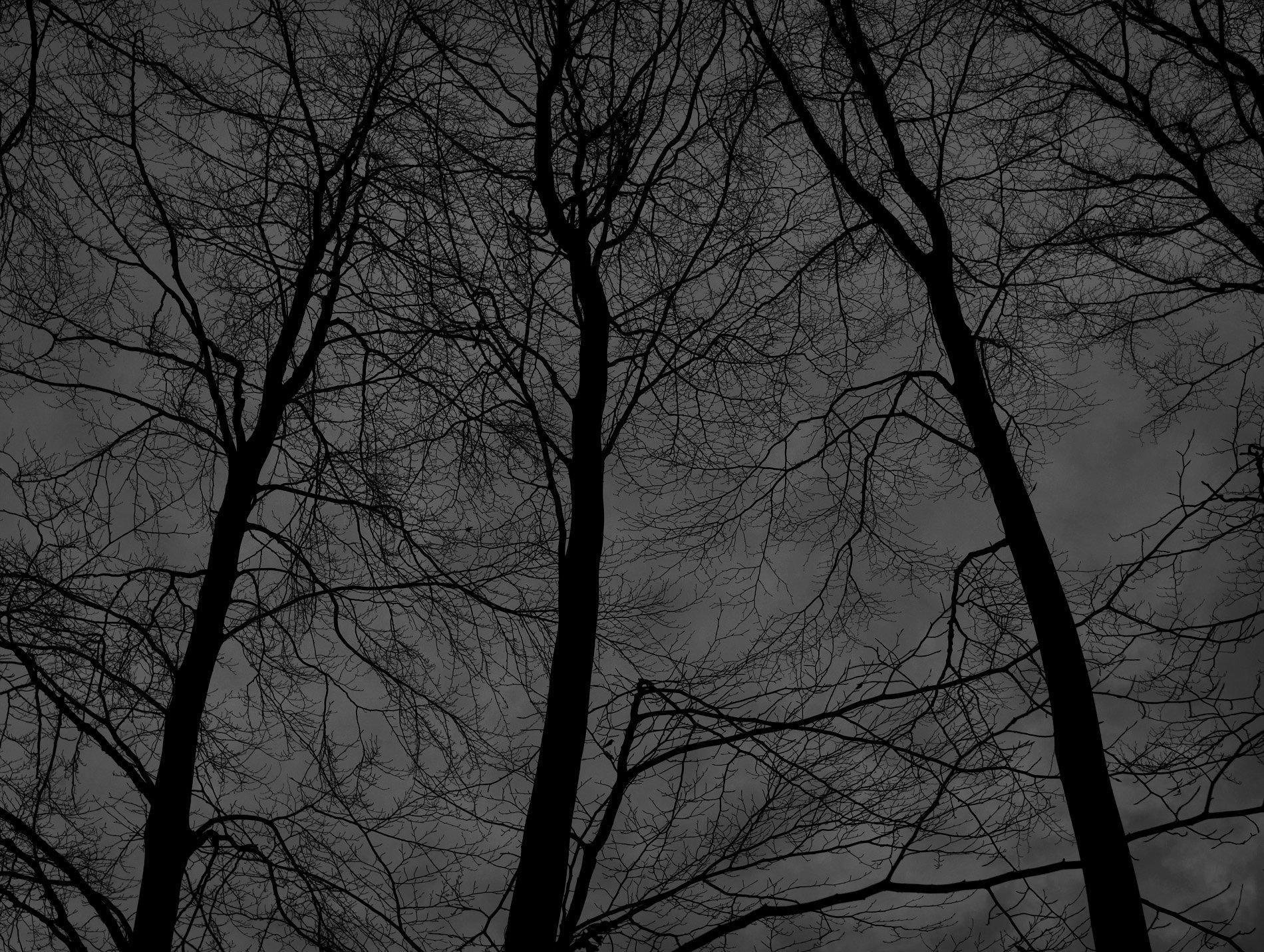 Dark black bare trees 06