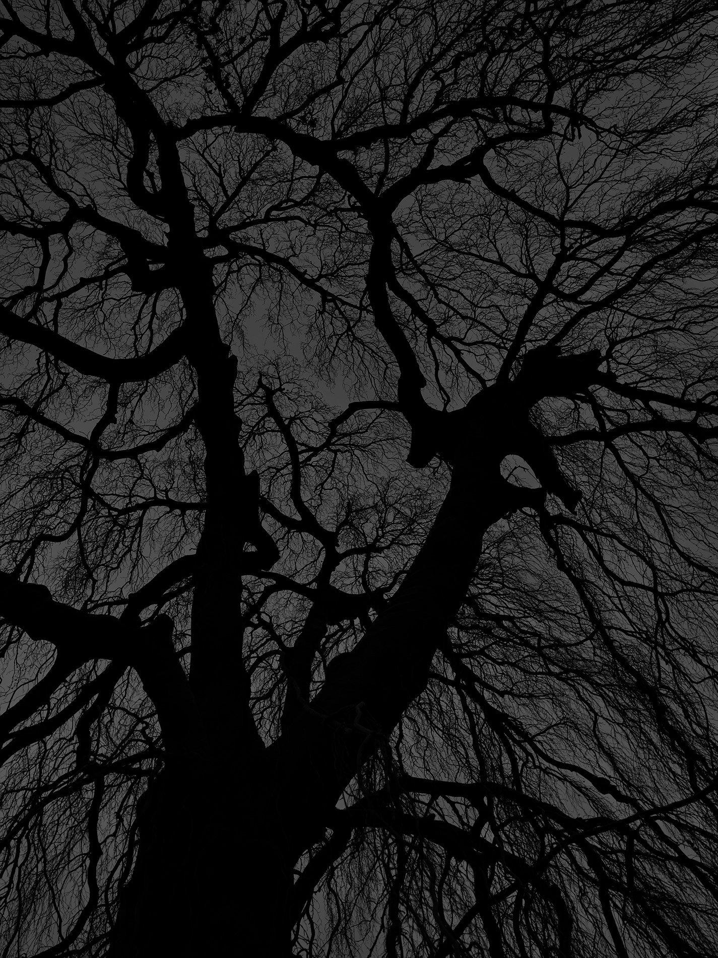 Dark black bare trees 07