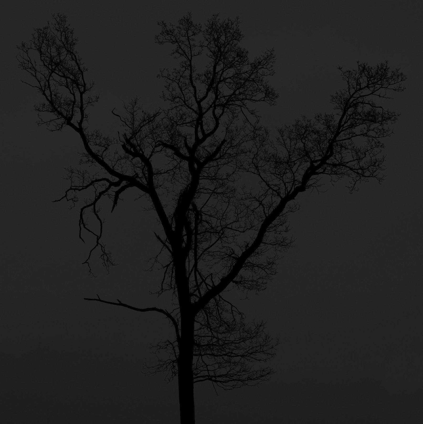 Black-dark-trees-winter-woods-black-white-copyright-photographer-Kenneth-Rimm-9b.jpg