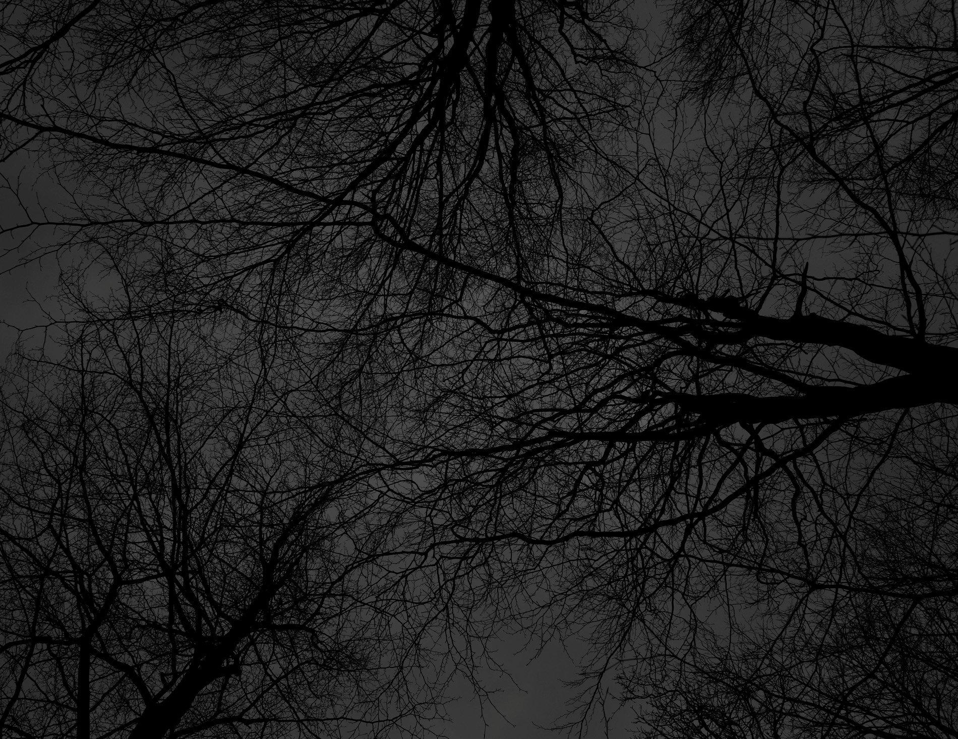 Dark black bare trees 01