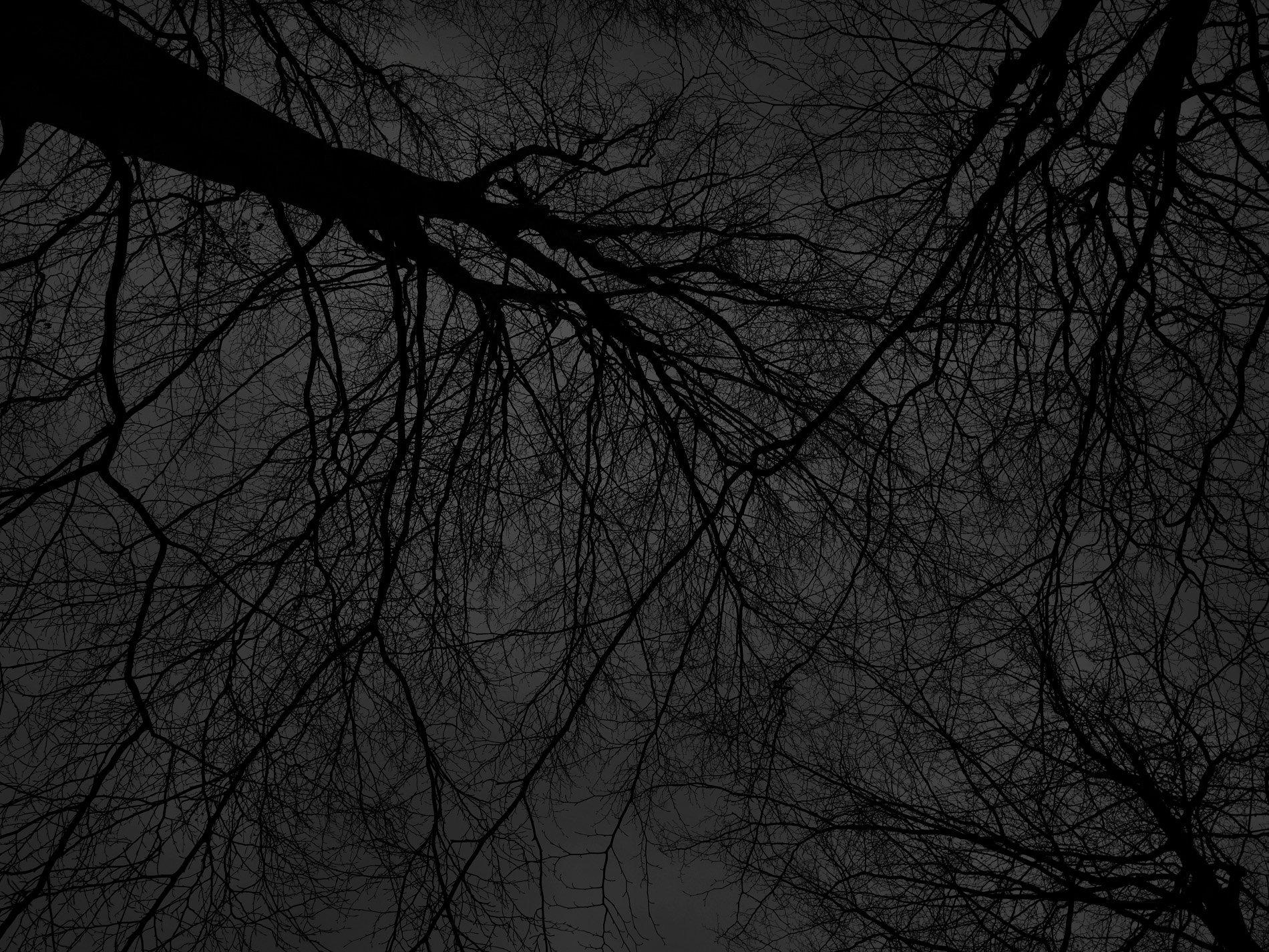 Dark black bare trees 03