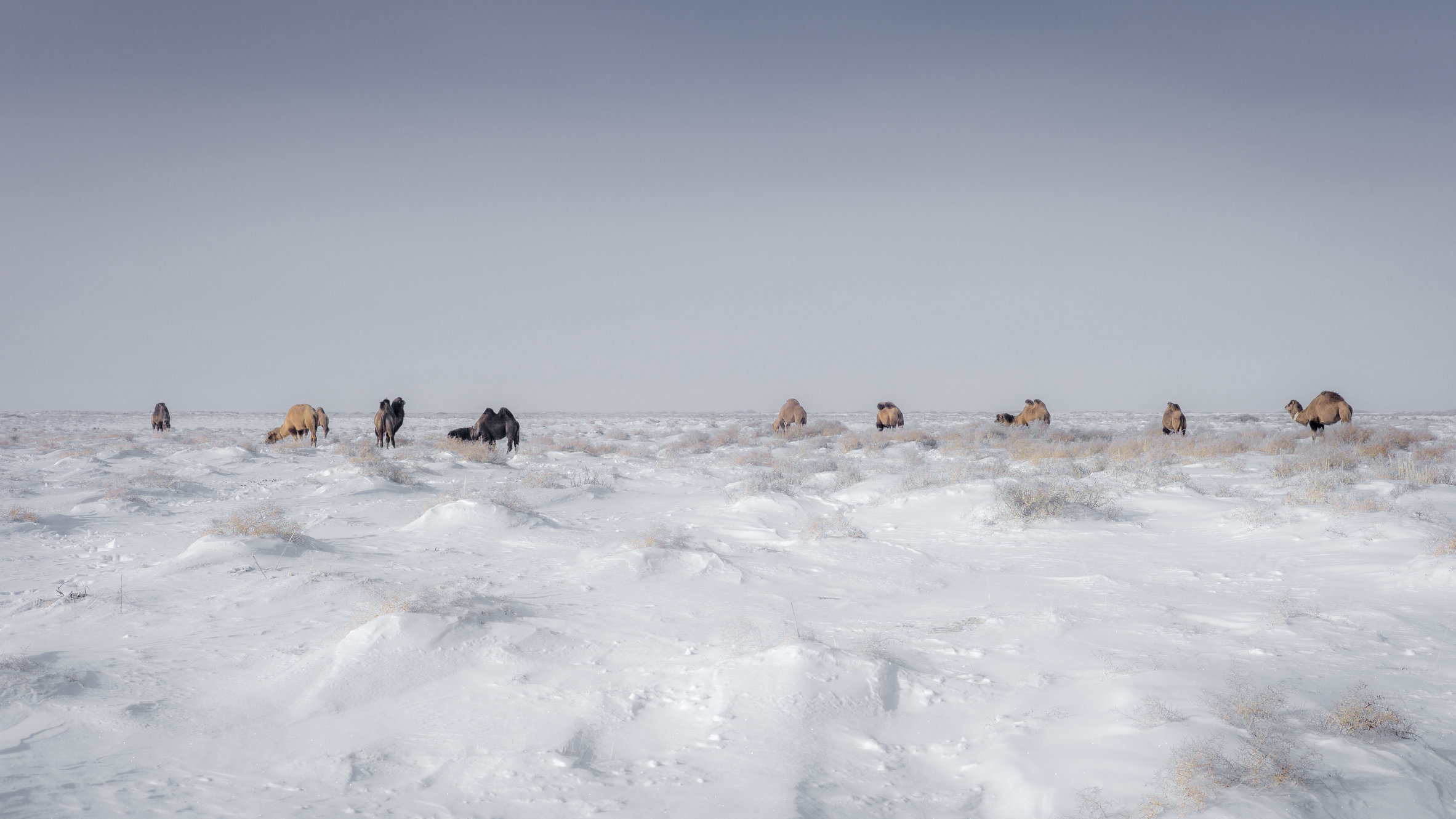 Aral Landscapes-66-bewerkt.jpg