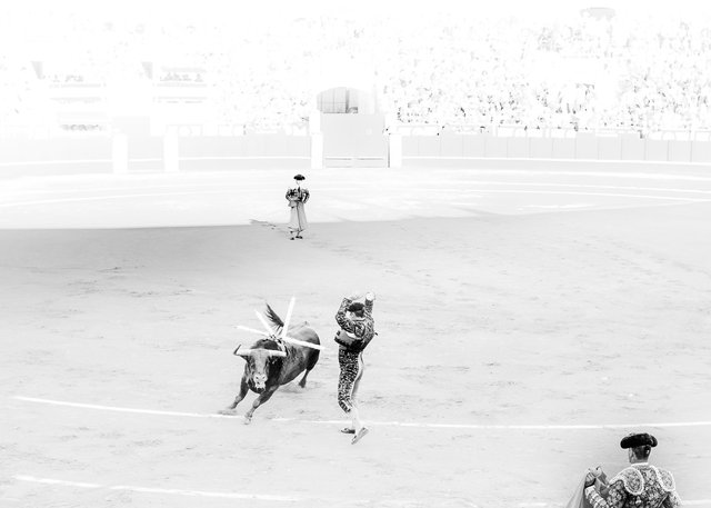 The Bullfight-30.jpg