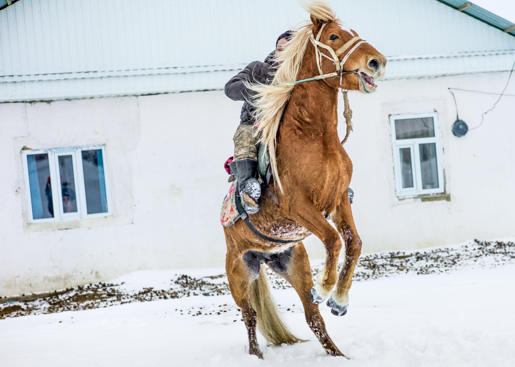 The horse-7.jpg