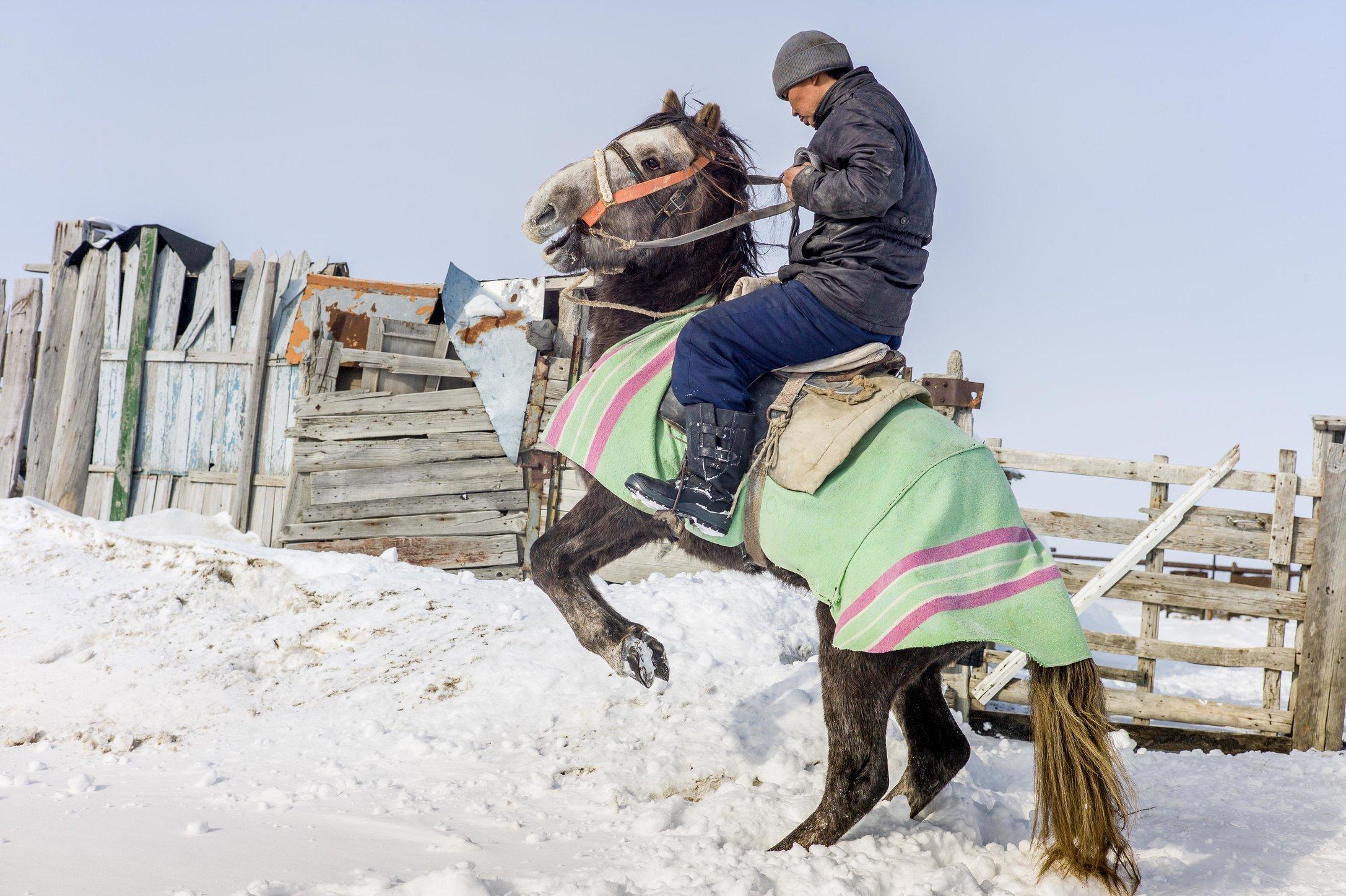 The horse-51.jpg