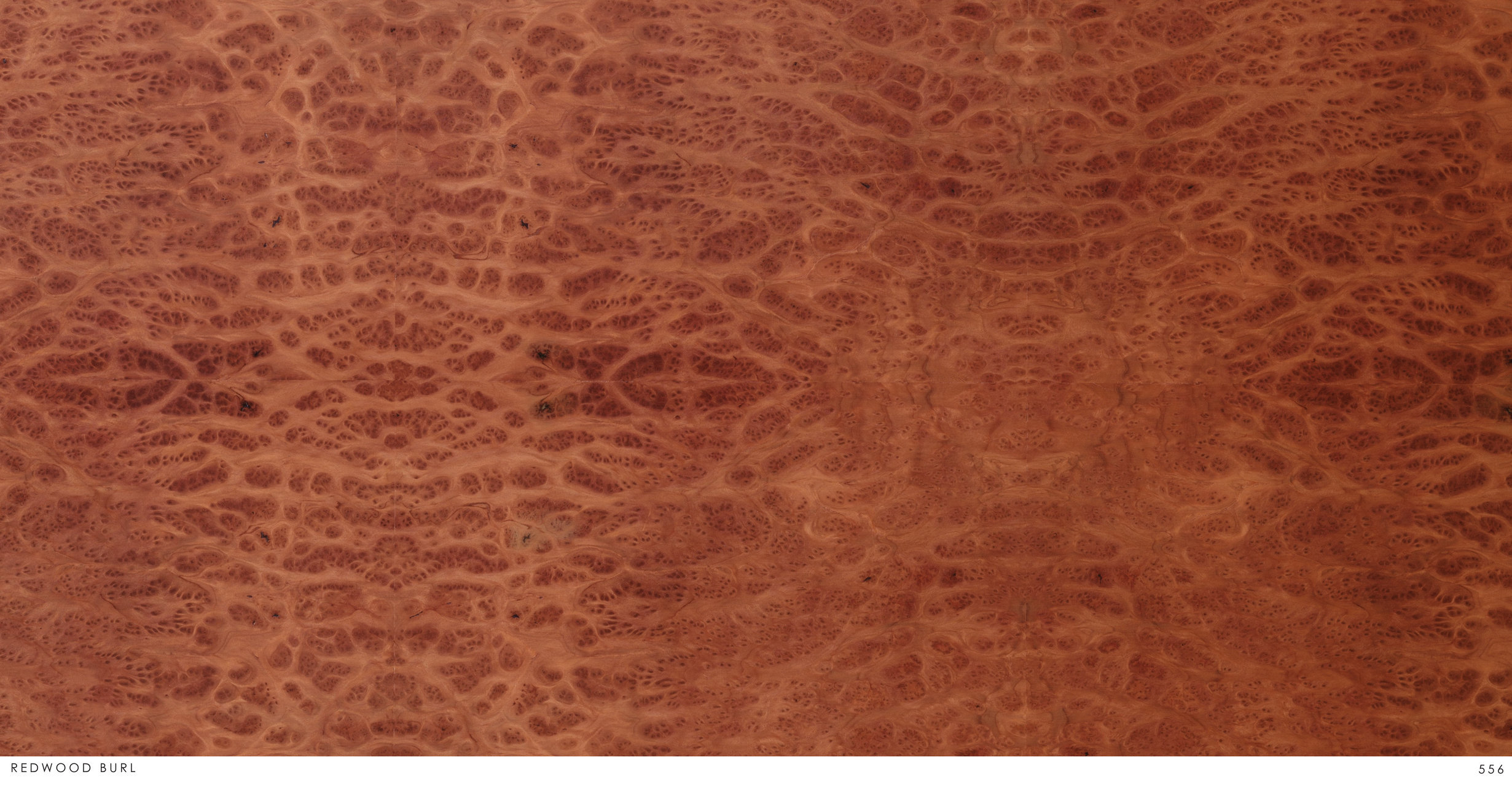 REDWOOD BURL 556.jpg