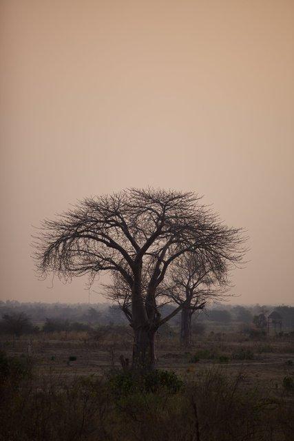 Malawi_062.jpg