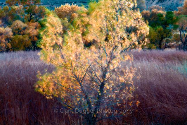 Lone_Pine-1071-Edit.jpg