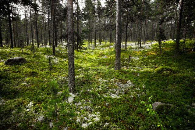 Mora - Sweden