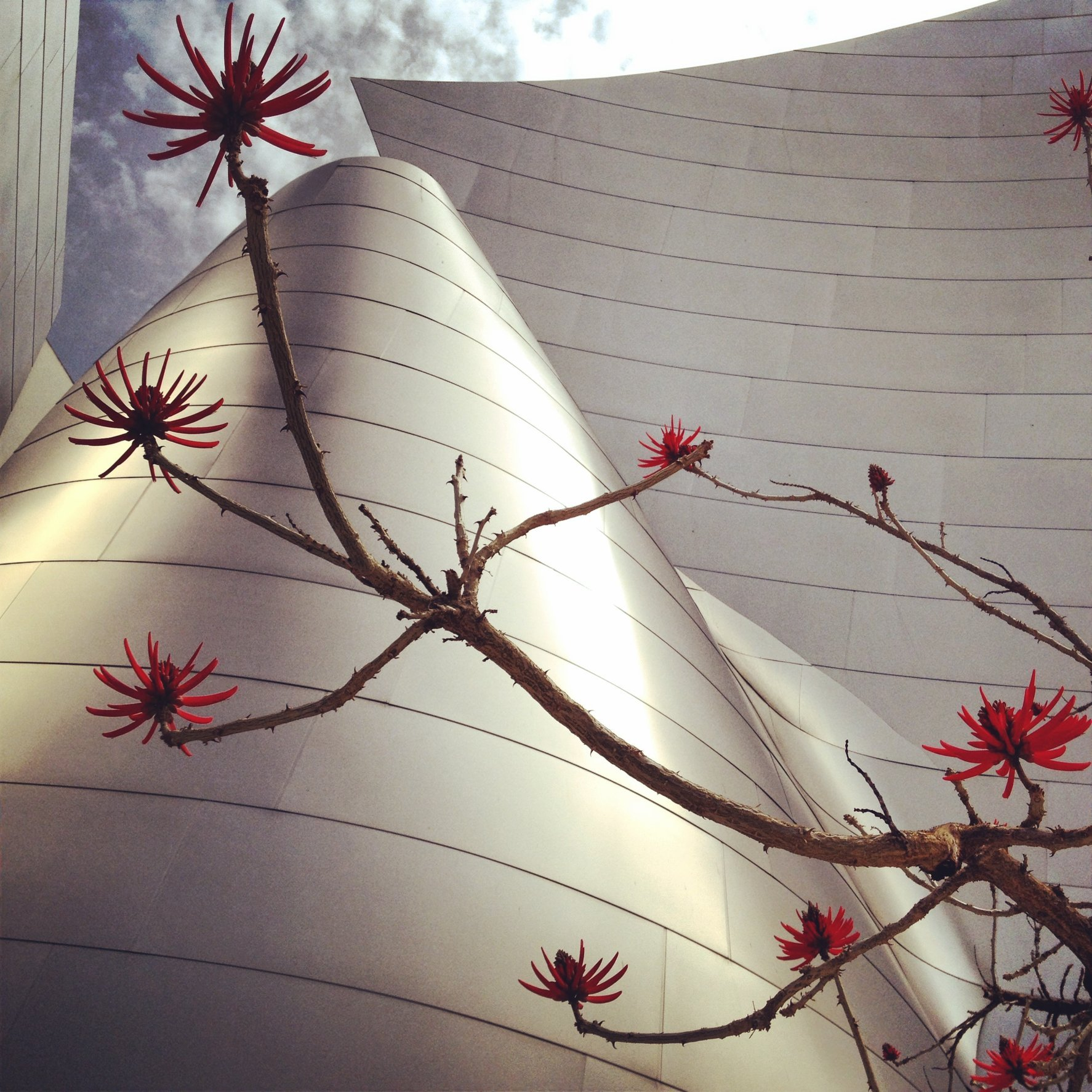 WALT DISNEY CONCERT HALL - RED 3
