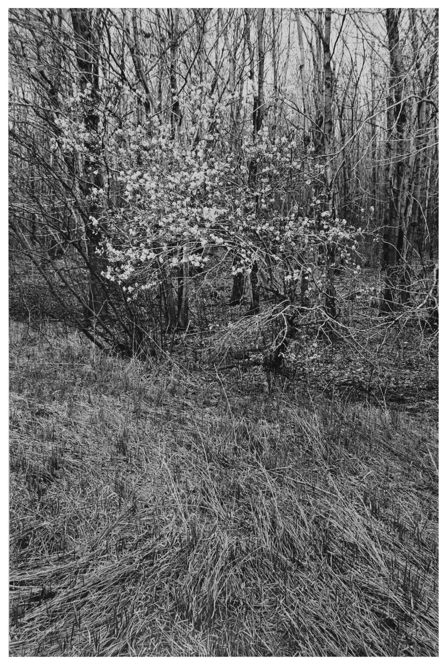 Trees  16.jpg
