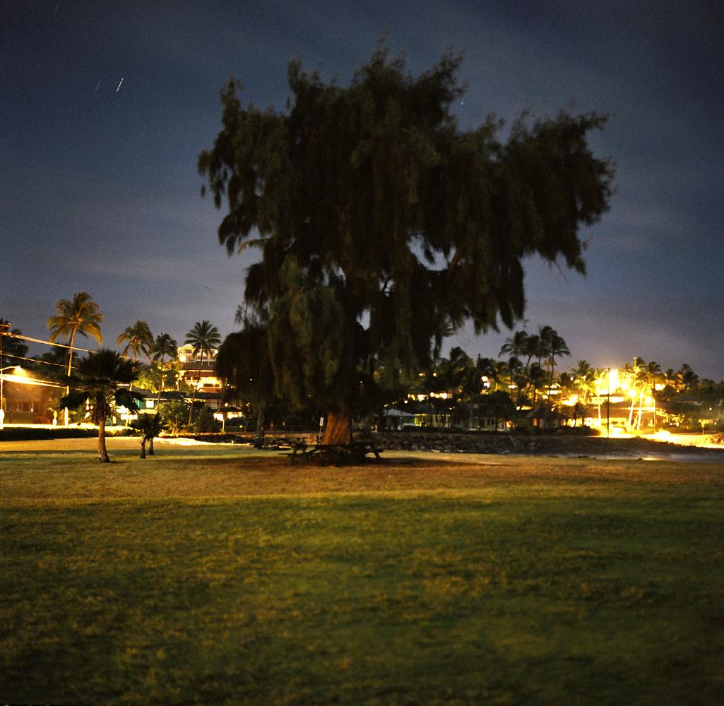 bigtree2.jpg
