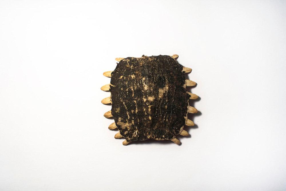龟甲  (gui jia)