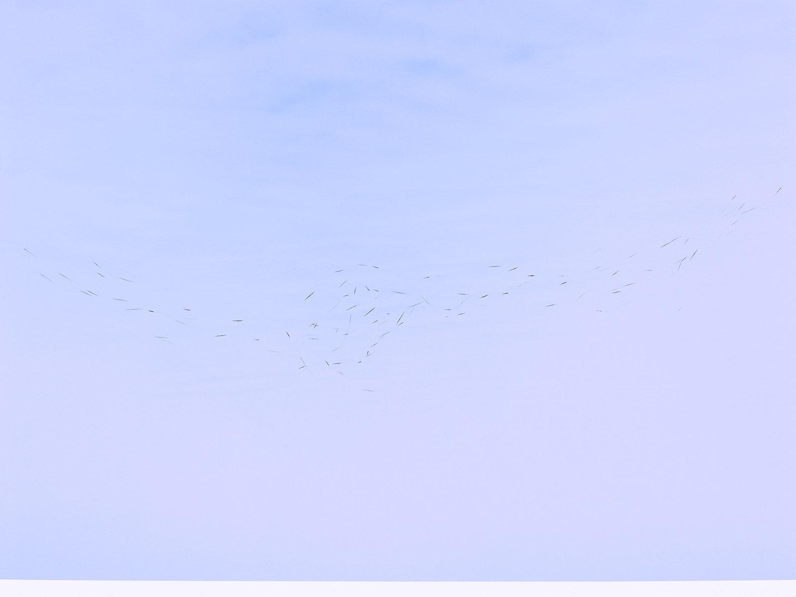 10-brief movement-caleb-cain-marcus.jpg