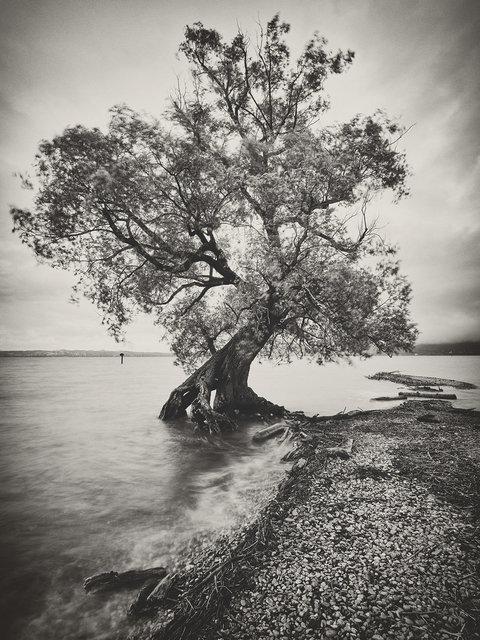 Baum Wocherhafen