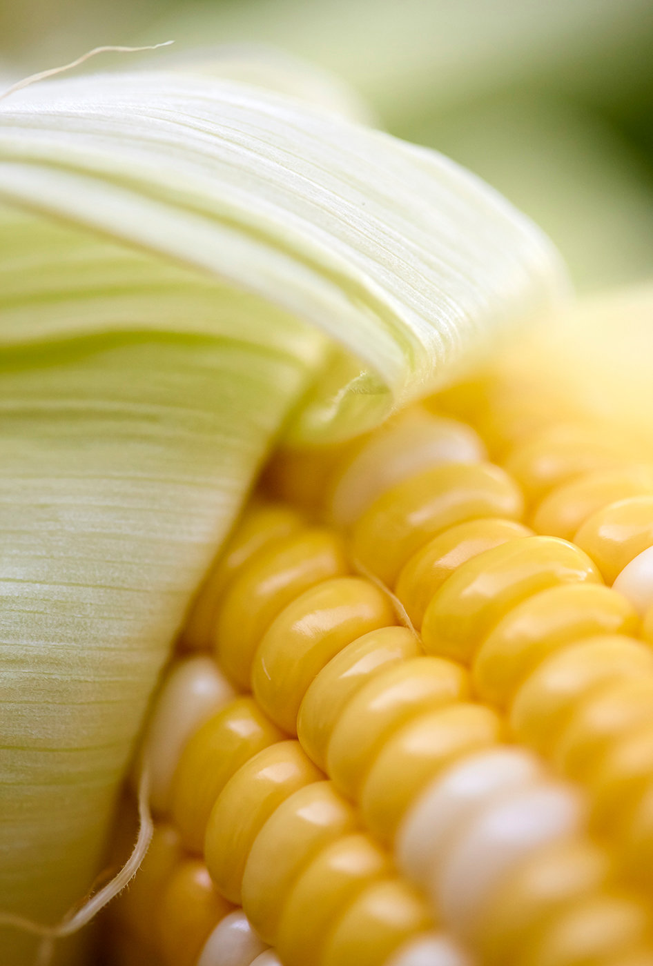 Corn_Raw.jpg