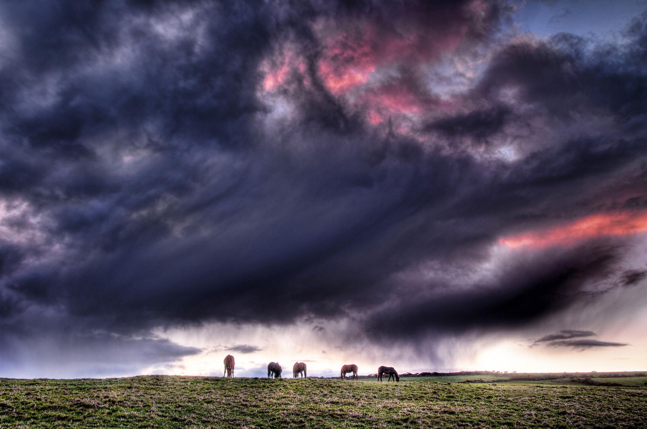 Kilfarrassey Horses  -  SWPP Landscape Shortlist 2012