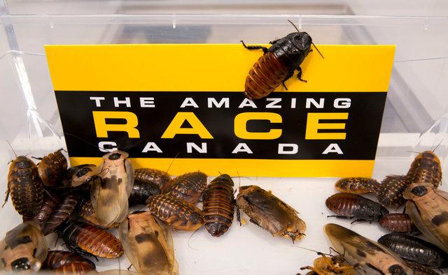 Amazing_Race_139.jpg