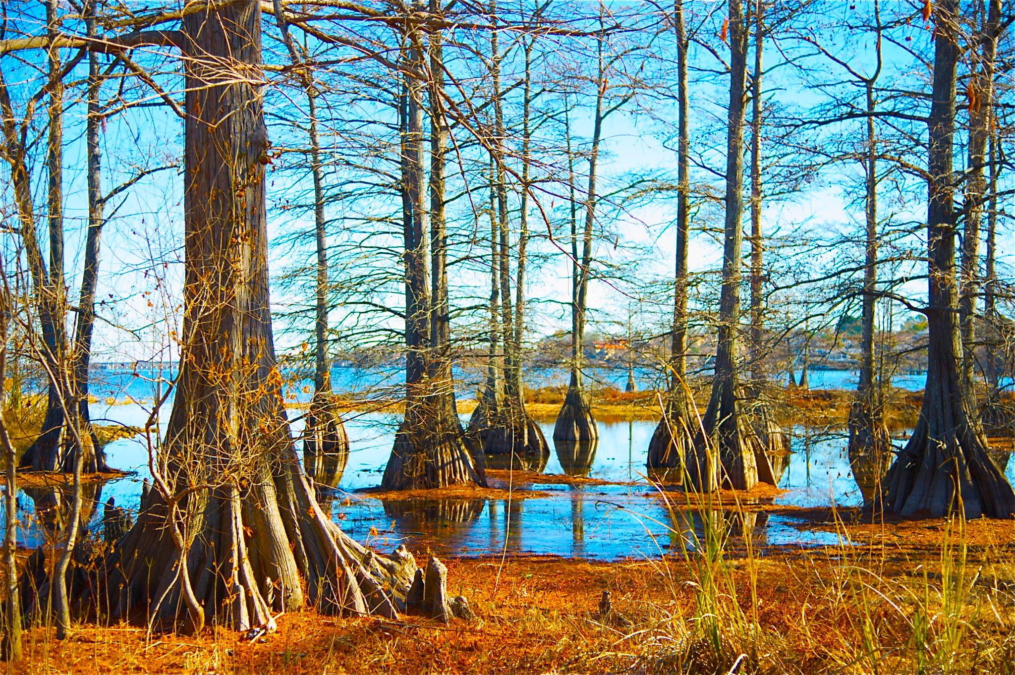 Swamps, LOUISIANA