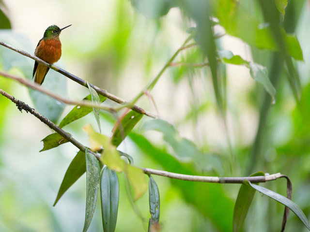 the hotel offers complimentary hummingbird and orchid tours