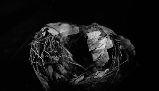 Nest, Black Tern (<i>Chlidonias niger surinamensis</i>), Holga 120N, Ilford Delta Pro 100, 2015