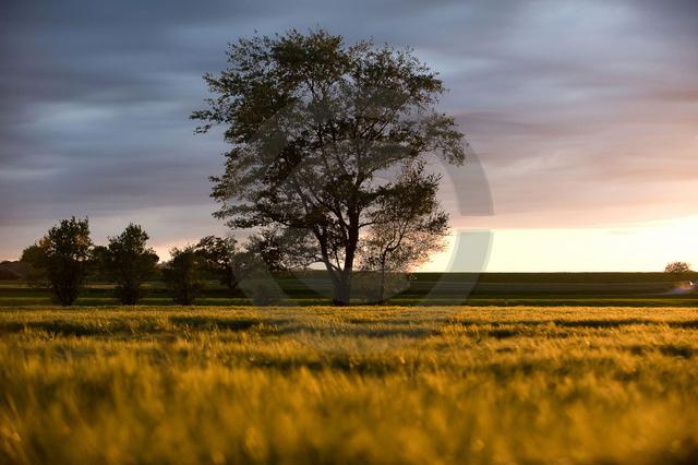 Landschaften.jpg