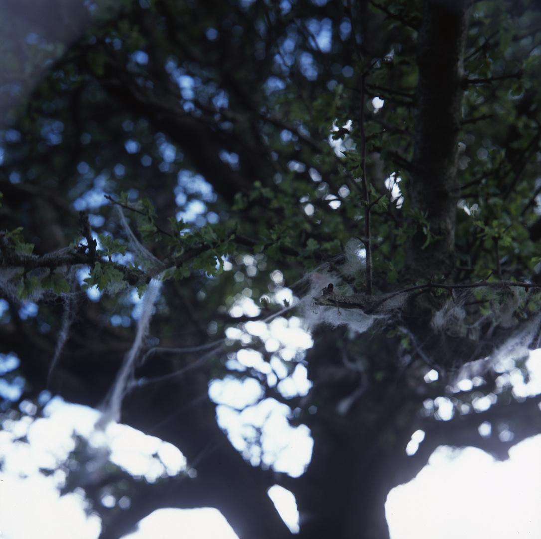 ttree 2.jpg
