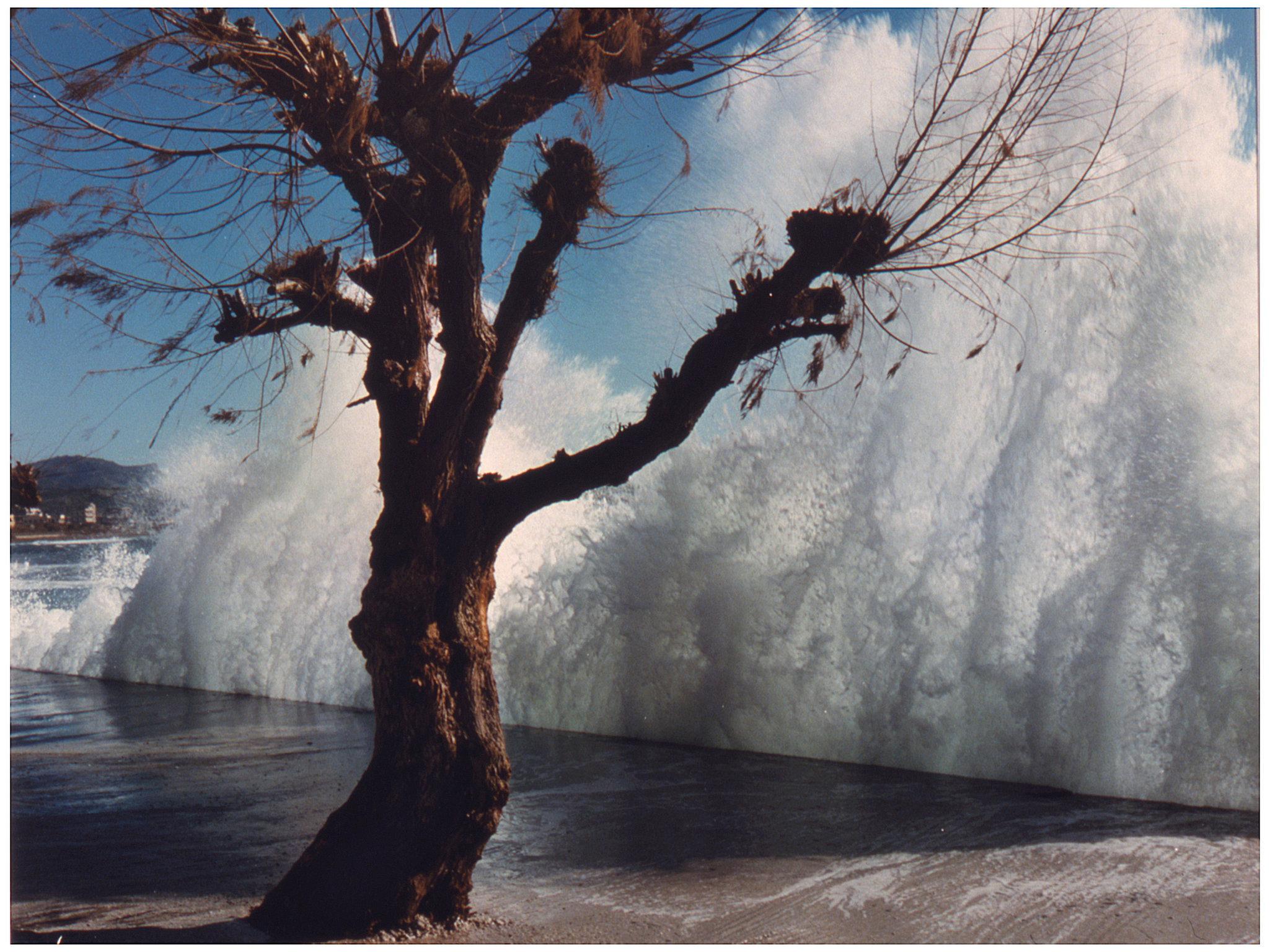 Landscapes Color Tree Storm Crete.jpg