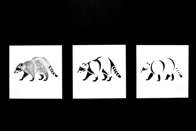 Raccoon 4-10-12.jpg