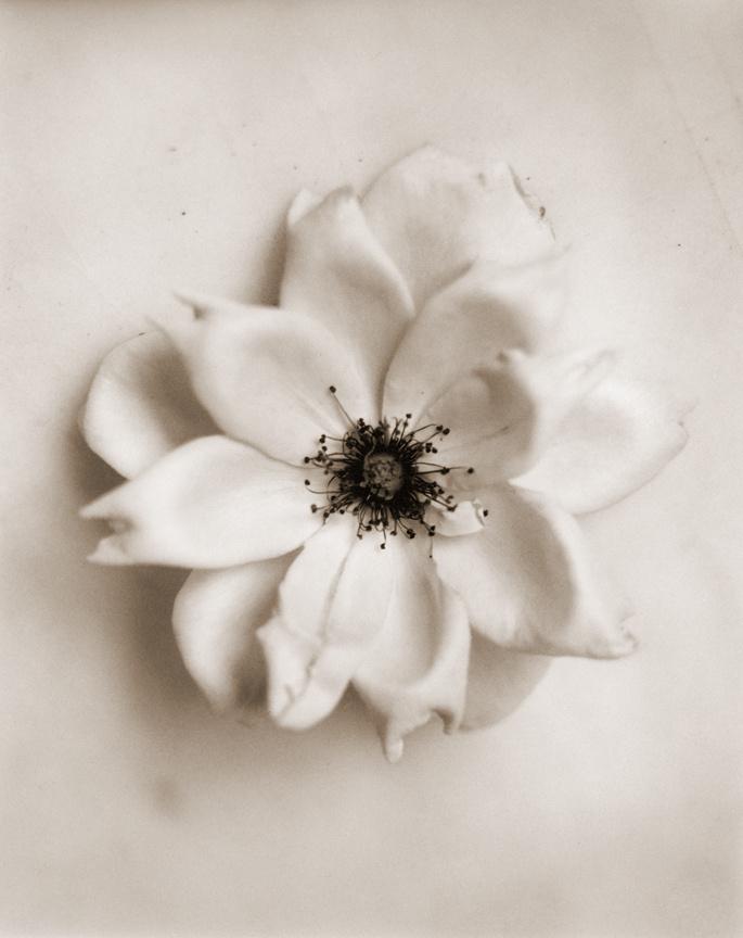 garden_rose.jpg