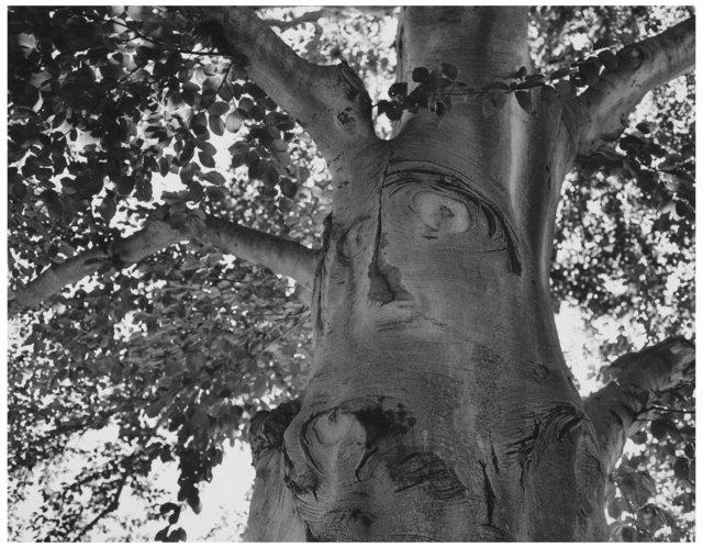 Trees  24.jpg
