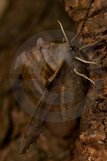 Insekten_Copyright_062.jpg