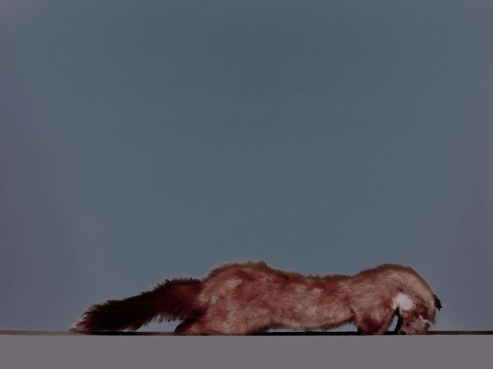 fox trotte.jpg