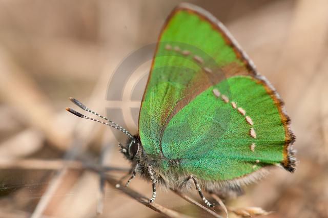 Insekten_Copyright_320.jpg