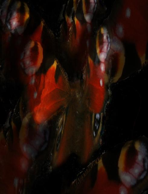 Butterflies in the Dark- 2 by Ali Gracie