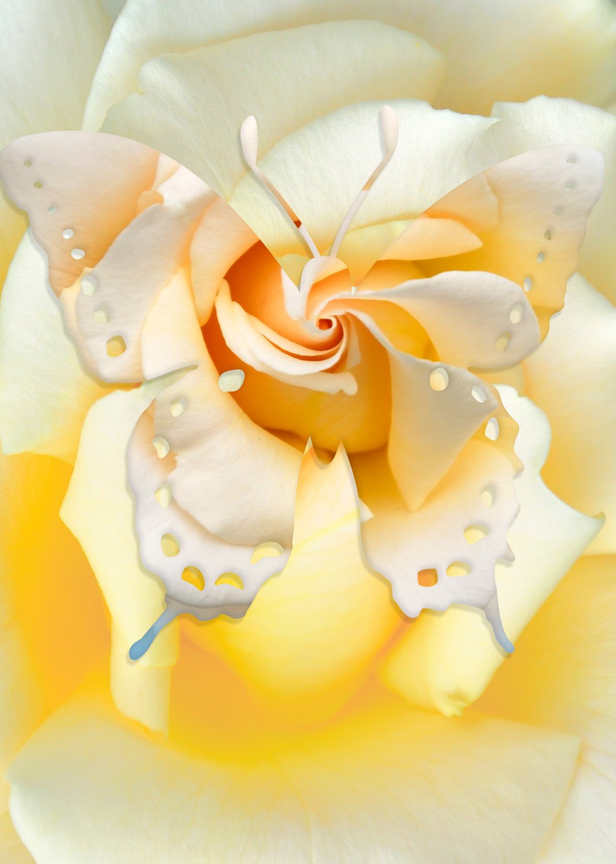 Butterfly-06 (1).jpg
