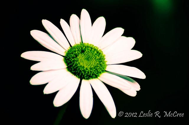 photoforgephoto (1).jpg